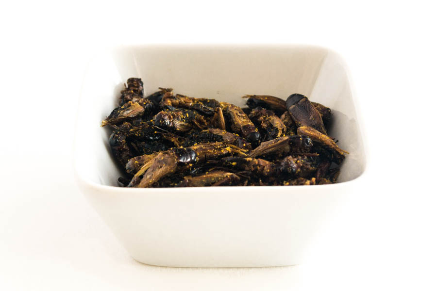 insectes-comestibles-grillons-curry-4