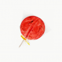 Mealworm strawberry lollipop