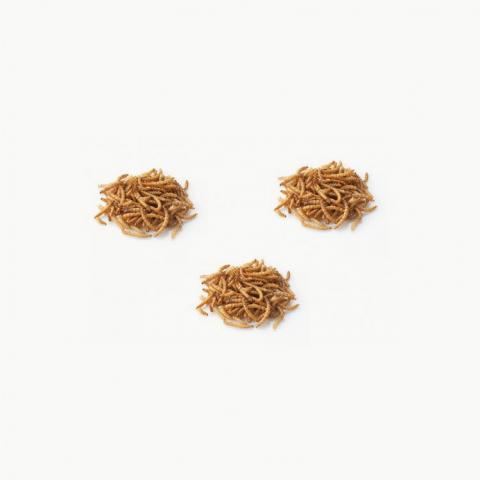 Pack de trois boîtes de vers de farine Molitor - INSECTÉO