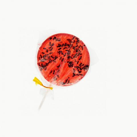 Strawberry & Ants lollipops