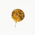 Chupete de naranja y hormigas
