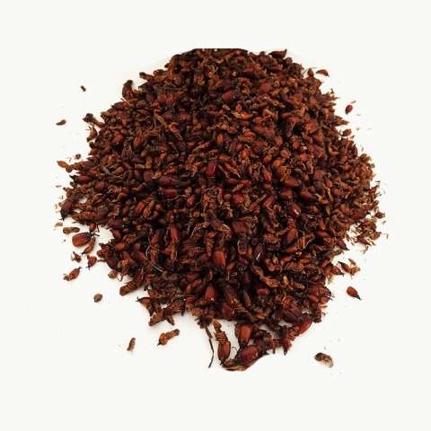 Termitas rojas